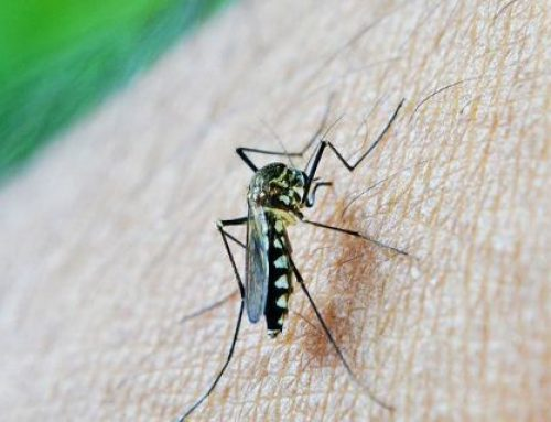 Φάρμακο καθιστά «θανατηφόρο» το αίμα μας για τα κουνούπια – Ελπίδες για την εξάλειψη της ελονοσίας