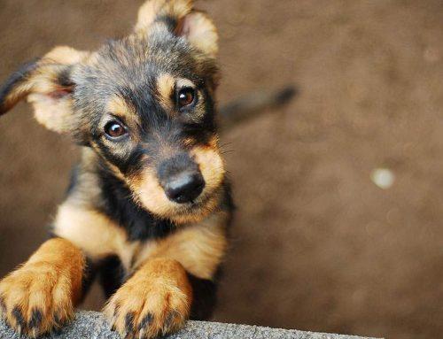 «Τρέχει» το πρόγραμμα προστασίας δημόσιας υγείας από αδέσποτα ζώα στο Δήμο Κορινθίων