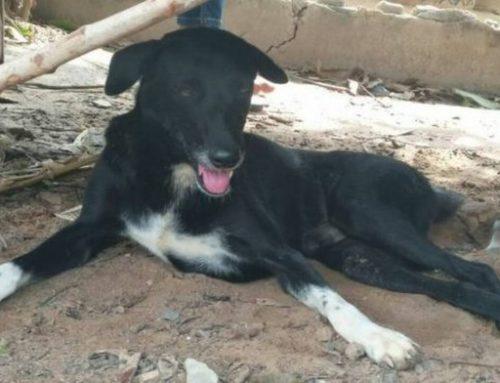 Σκύλος – ήρωας: Έσωσε νεογέννητο που έθαψε η 15χρονη μητέρα σε χωράφι