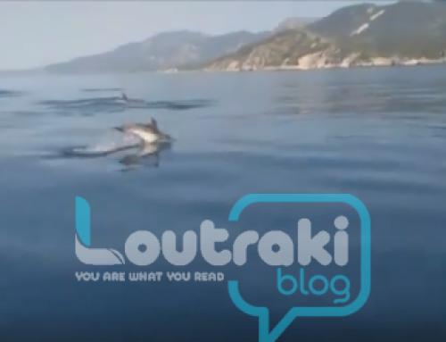 Φανταστικό ! Βόλτα στον Κόλπο των Αλκυoνίδων με ….δεκάδες δελφίνια ! (video)