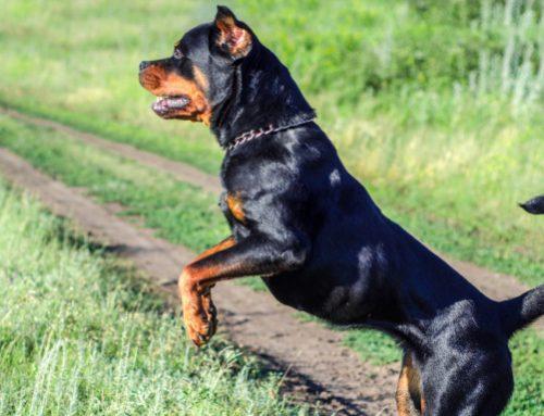 Ρόδος: Σκυλιά επιτέθηκαν σε τουρίστες – Στο νοσοκομείο μία 48χρονη