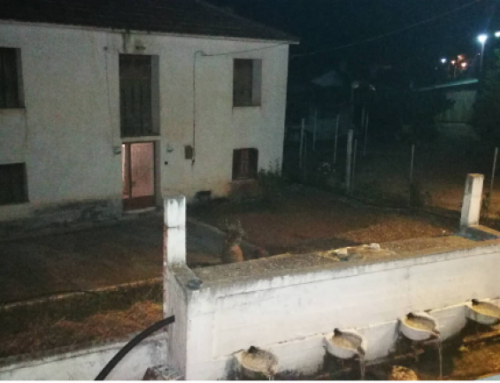 Κορινθία:«Δεν τη σκότωσα, ήθελε να τη θάψω στην αυλή»: Τι ισχυρίζεται ο γιος της ηλικιωμένης