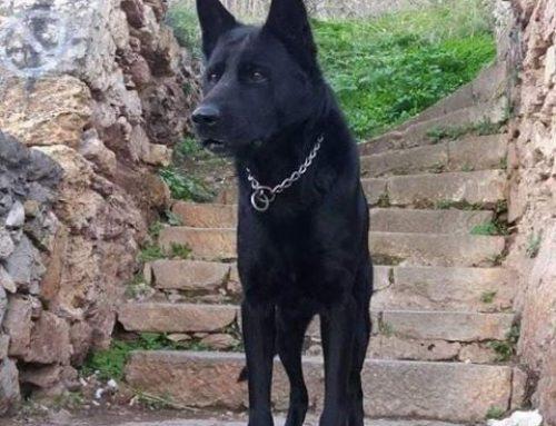 """""""Εφυγε"""" ο BLACKY της Ελληνικής Αστυνομίας"""