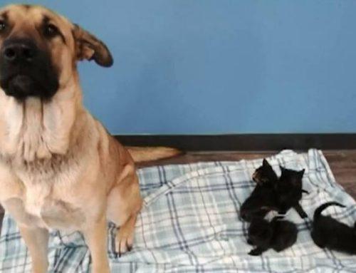 Καναδάς: Αδέσποτος σκύλος έσωσε νεογέννητα γατάκια