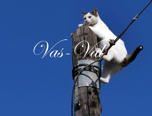 Διάσωση γάτας στην Κόρινθο (εικόνες)