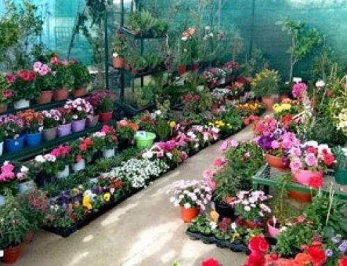 """""""Ανθοζωή"""" στο Λουτράκι: Βάλτε λουλούδια στη ζωή σας !"""