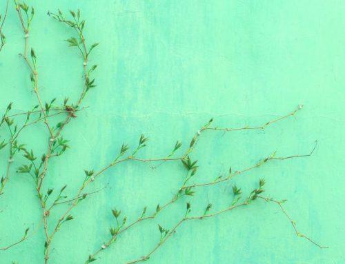 Πράσινο: 7 περίεργα πράγματα για το χρώμα της φύσης