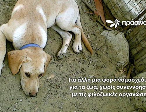 Δημόσια ηλεκτρονική διαβούλευση για την προστασία των ζώων