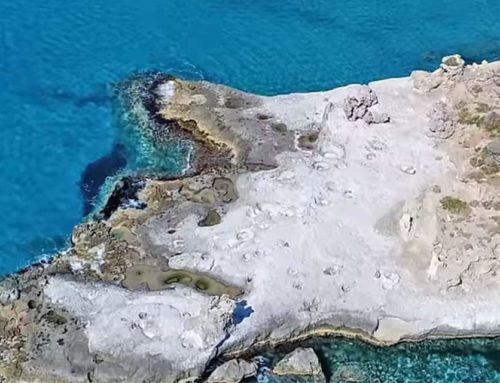Το μοναδικό απολιθωμένο φοινικόδασος της Ευρώπης βρίσκεται στην Πελοπόννησο
