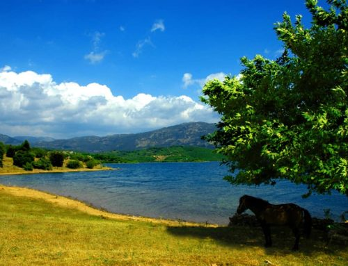 Εισήγηση της γραμματέας του Συλλόγου 'Οι φίλοι της λίμνης Λάδωνα' για τα προβλήματα της λίμνης