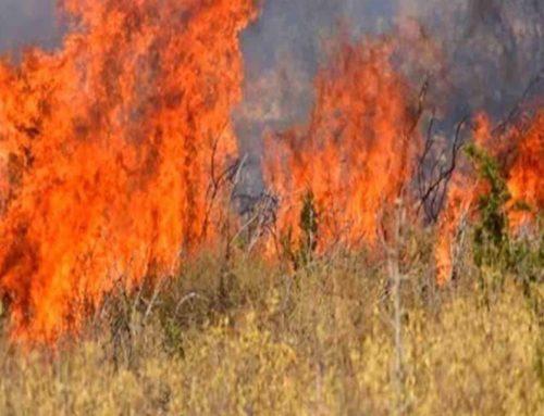 Φωτιά στο Φλάμπουρο Λουτρακίου