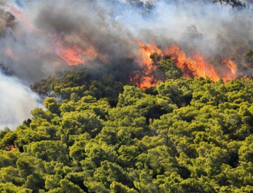 Πυρκαγιά σε δασική έκταση στην Τρίπολη. Video από την κατάσβεση των εναέριων μέσων