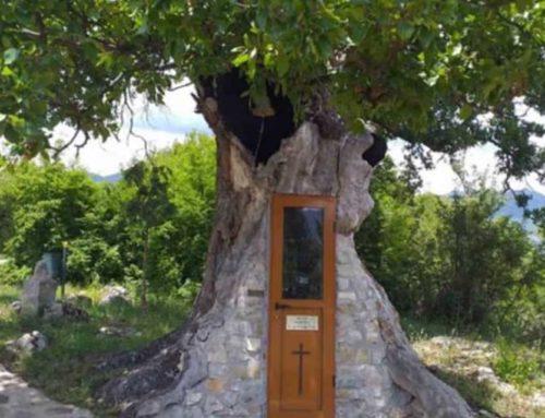 Το κρυμμένο εκκλησάκι μέσα σε μια καμμένη βελανιδιά στην Κόνιτσα