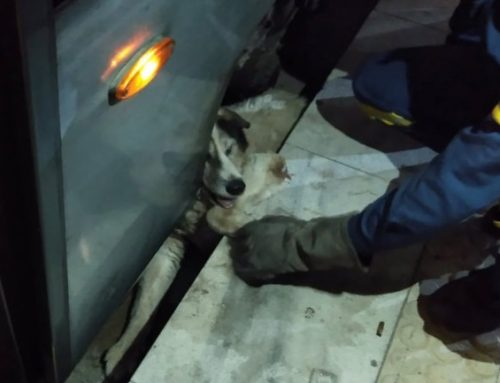 Η Πυροσβεστική διέσωσε σκύλο που εγκλωβίστηκε στις γραμμές του Τραμ