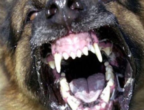Κόρινθος: Aδέσποτος σκύλος δάγκωσε στο πρόσωπο 8χρονο αγοράκι