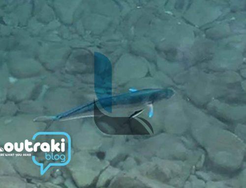 Λουτράκι: Τι ψάρι είναι αυτό;
