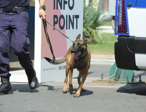 Κορονοϊός: Οι σκύλοι μπορούν να ανιχνεύσουν με ακρίβεια την Covid-19;