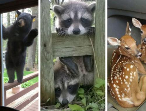 «Τζα!» – Υπέροχα ζώα που πέρασαν απλώς να πουν ένα γεια (φωτο)