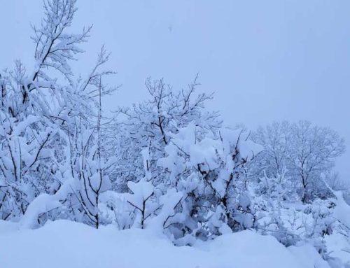 Αλπικό τοπίο στα Τρίκαλα Κορινθίας (φωτο)