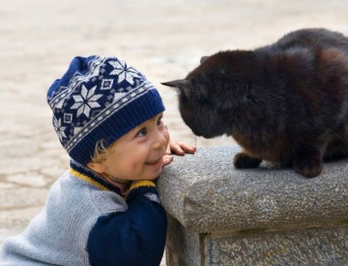 Γάτα προστατεύει μωρό που προσπαθεί να σκαρφαλώσει στο μπαλκόνι (video)