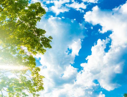 Ναύπλιο: Μαζί με τον καιρό «τρελάθηκε» και η φύση – Δείτε τι βγήκε στα δέντρα