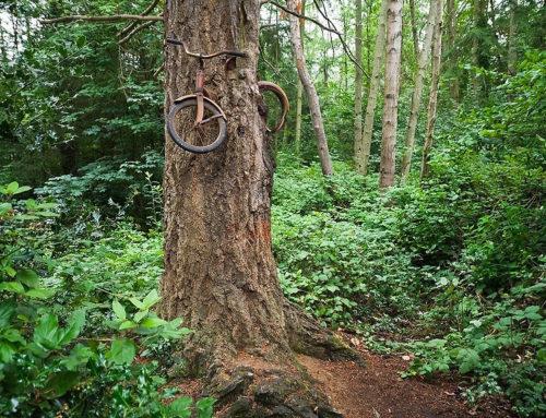 Το ροζ ποδήλατο που το κατάπιε ένα δέντρο
