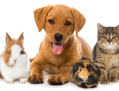 Κτηνίατροι μοιράζονται πράγματα που όλοι οι ιδιοκτήτες κατοικιδίων πρέπει να γνωρίζουν