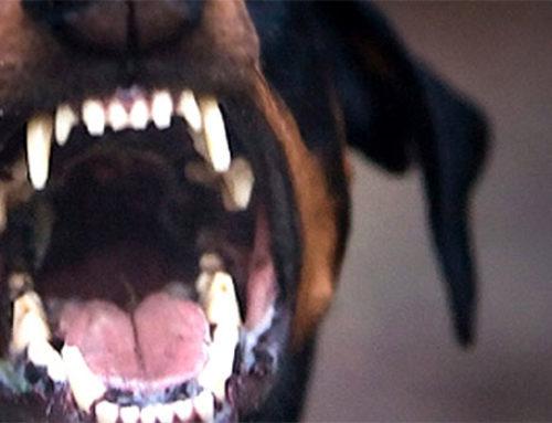 Λουτράκι: Αδέσποτο σκυλί δάγκωσε 15χρονο κορίτσι (φωτο-video)