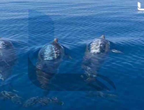 Φανταστικό θέαμα! Τα δελφίνια αγαπούν το Λουτράκι (video)